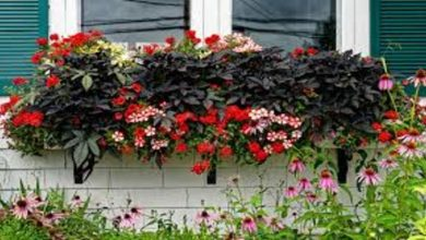 Photo of Drop Flowers Ideas to Your Front Window